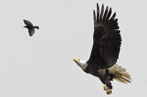 йог и птицы
