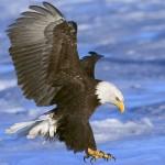 Притча о йоге и птицах