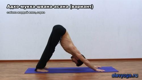 курс йоги для начинающих
