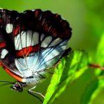 Баддха конасана (поза бабочки)