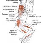 гарудасана анатомия