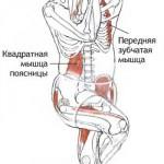 гарудасана анатомия1