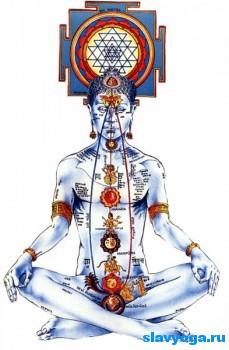 Виды йоги и их отличия