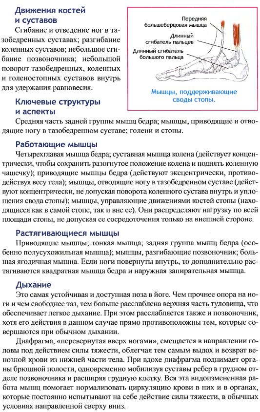 прасарита анатомия1