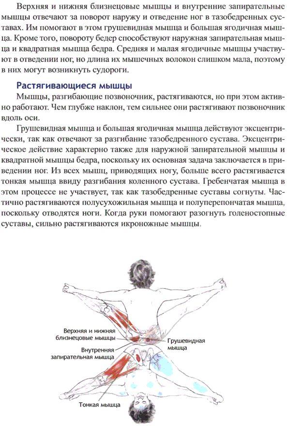 упавишта конасана анатомия