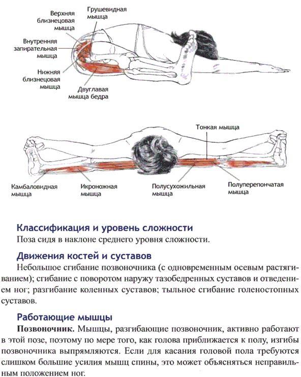 упавиштха конасана анатомия