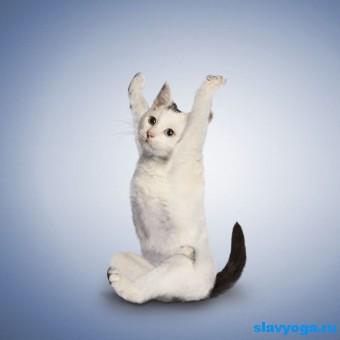 йога с животными