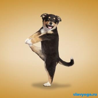 йога и животные