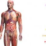 Тонкая анатомия йоги