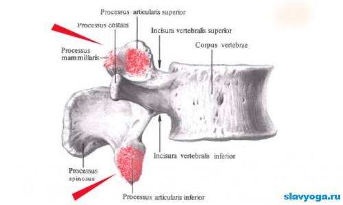 подвывих суставов позвоночника