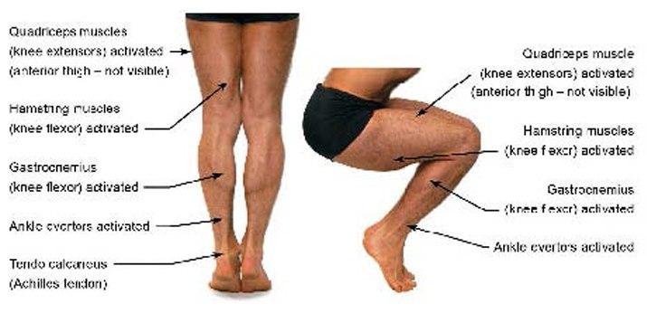 мышцы вокруг коленного сустава