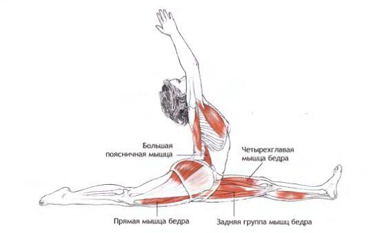 хануманасана анатомия