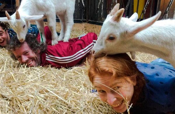 йога с козлятами