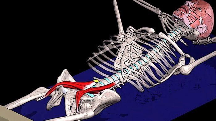подзвдошно-поясничная-мышца