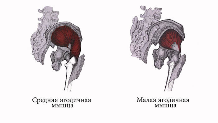 малая ягодичная мышца анатомия