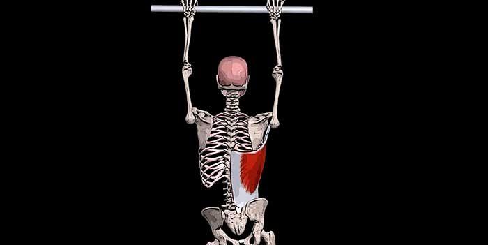 широчайшая мышца спины фото